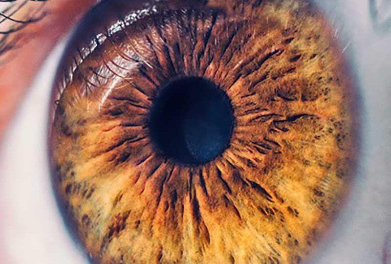 o-olho-humano